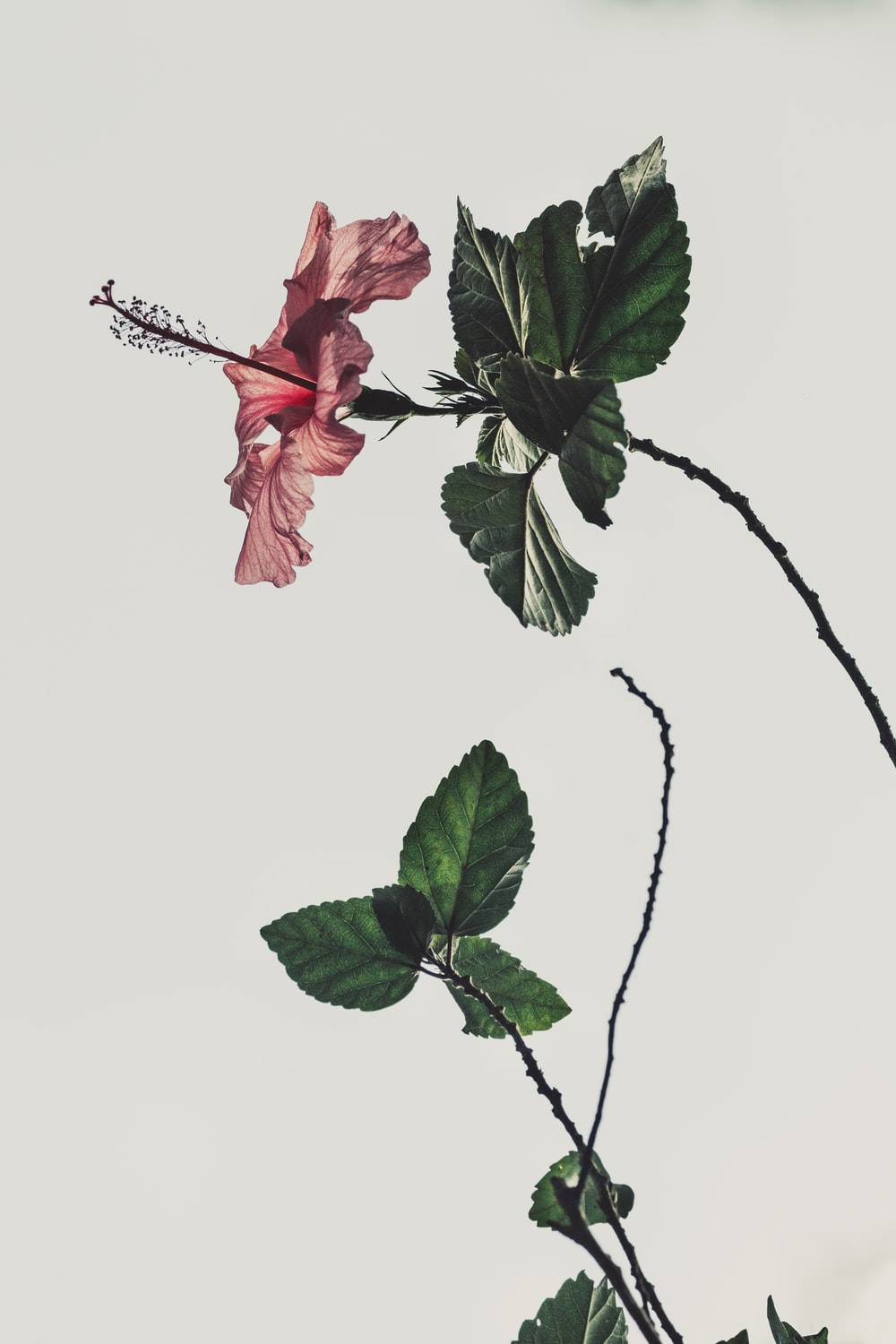 Flowers Aesthetic Pictures Download Free Images On Unsplash