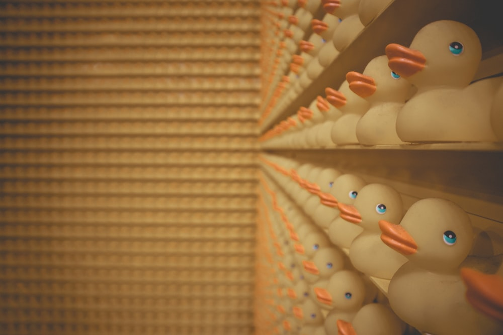 yellow rubber ducks on shelves