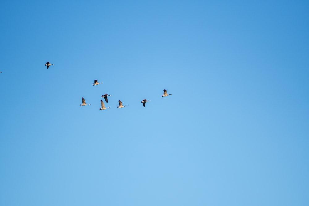black birds on mid air
