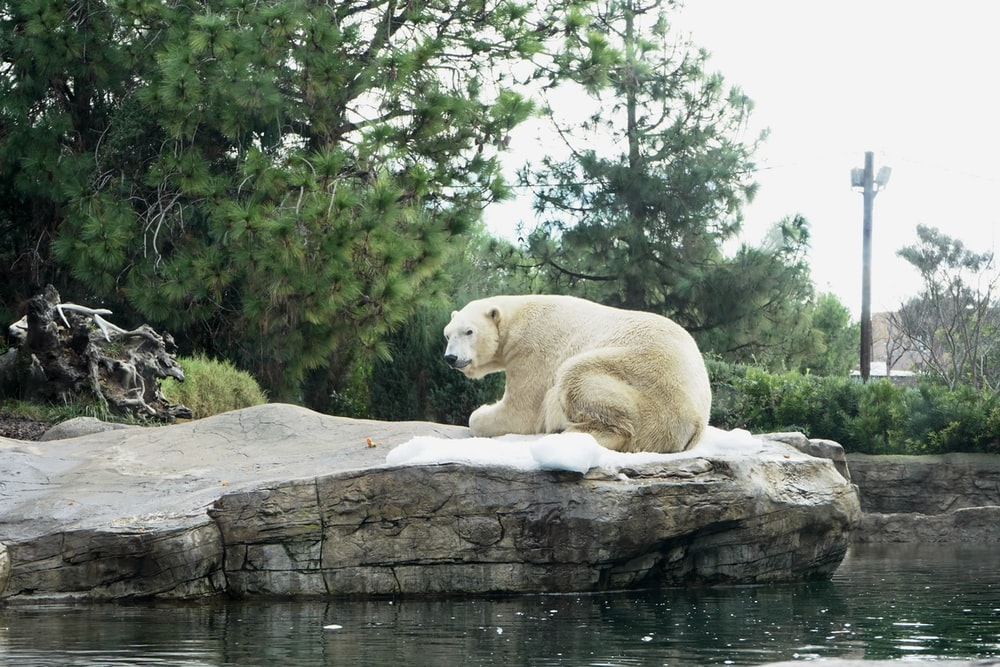 white bear on gray roc k