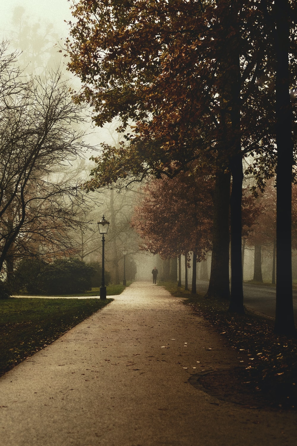 brown trees and pathway