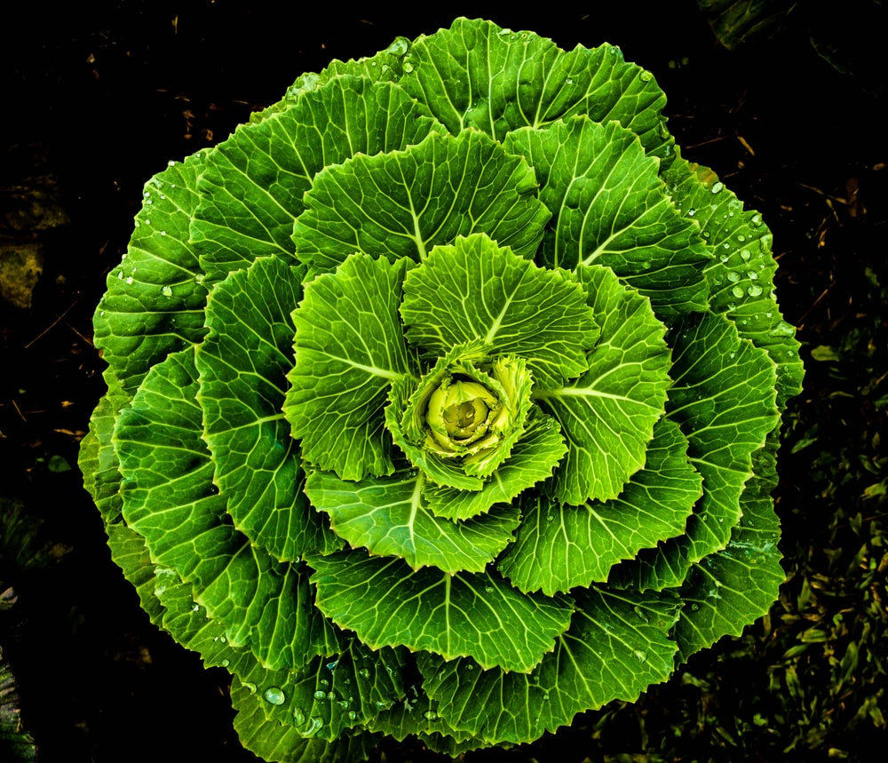 top-view photography green vegetable
