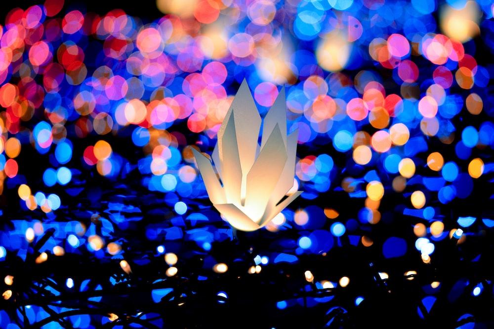 白い花のボケ写真