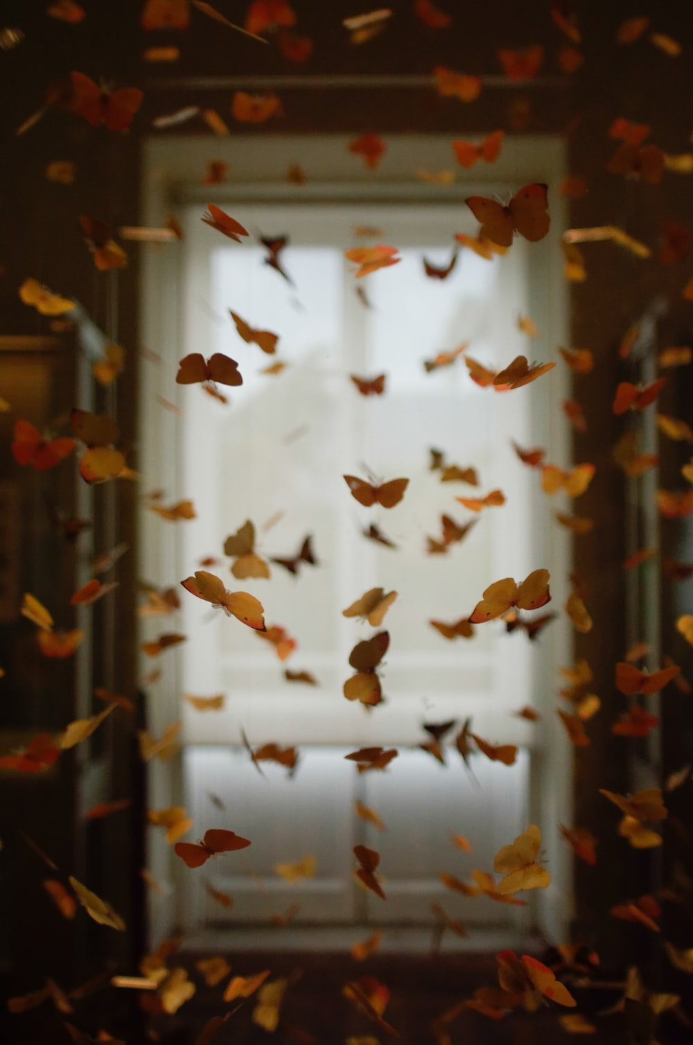 yellow and orange butterfly lot