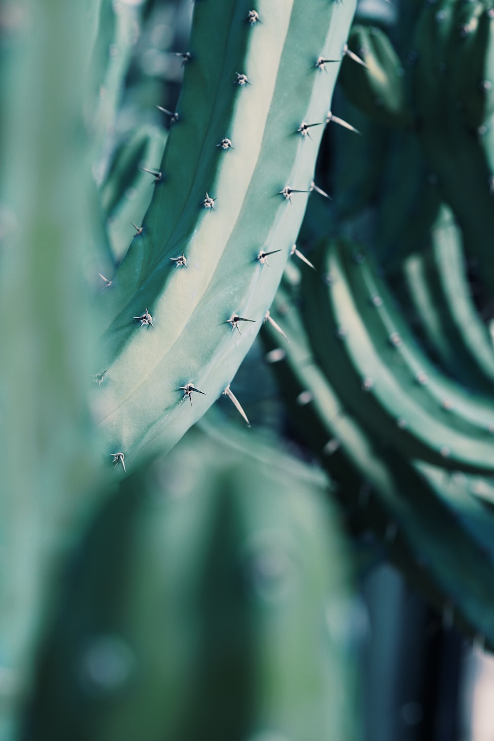 selective focus photography of cactus