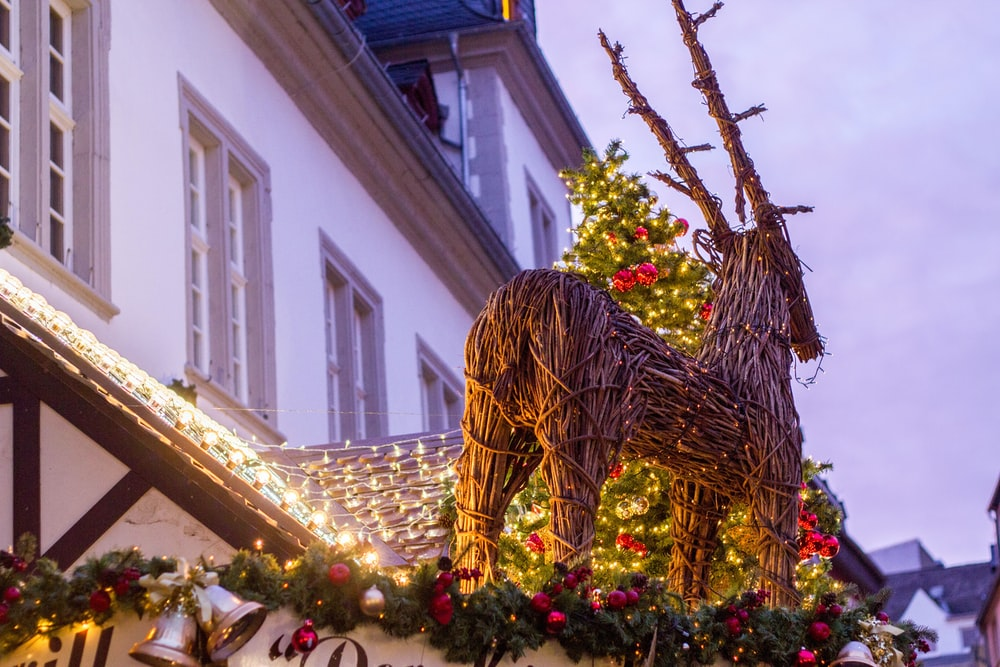 low angle photo of lighted deer topiary