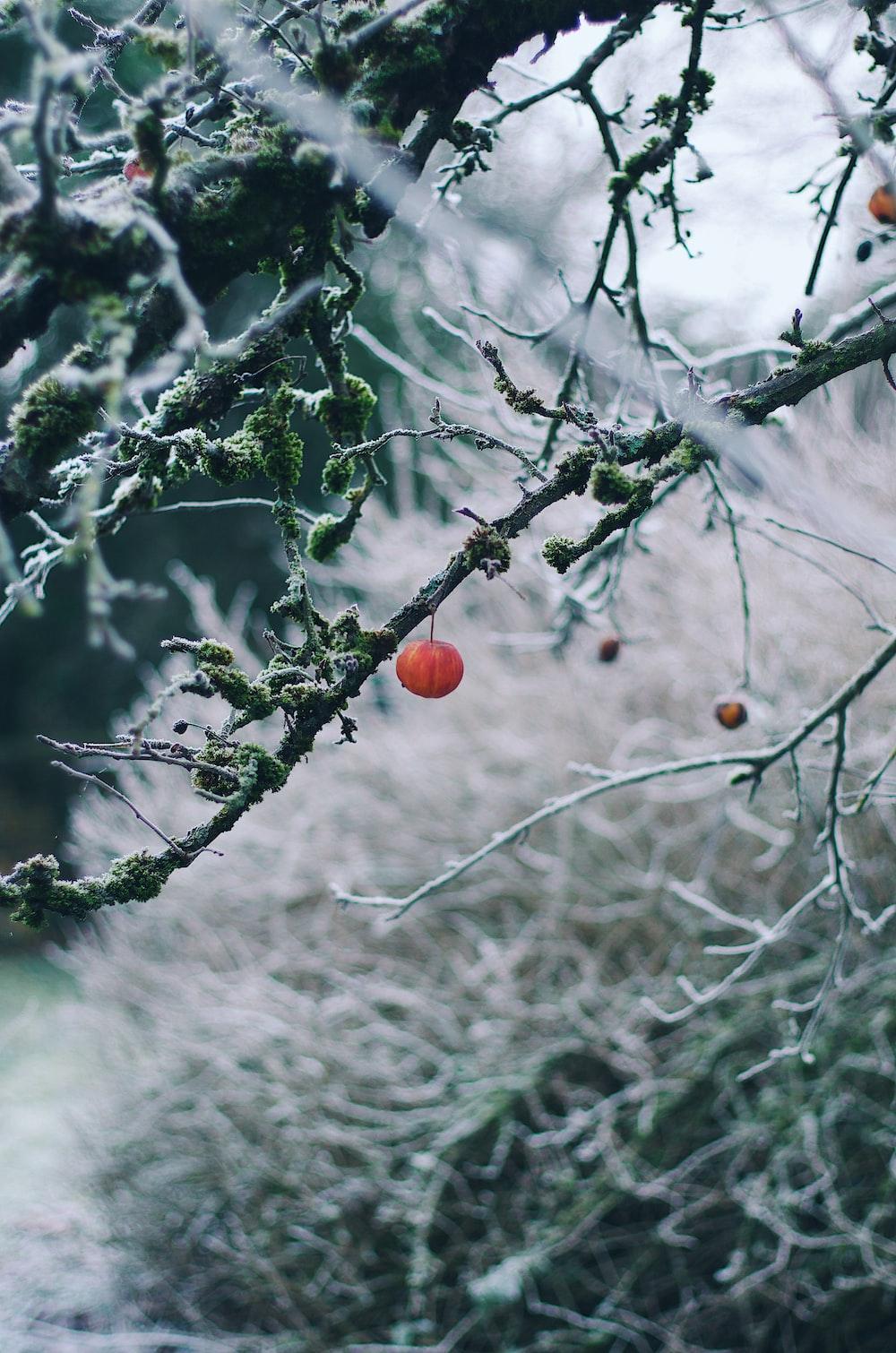 round orange-colored fruit