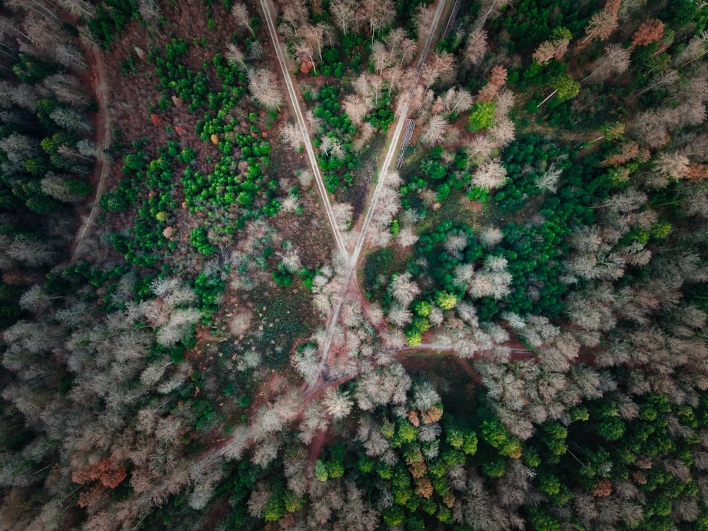 aerial photography of pathways forming X between trees