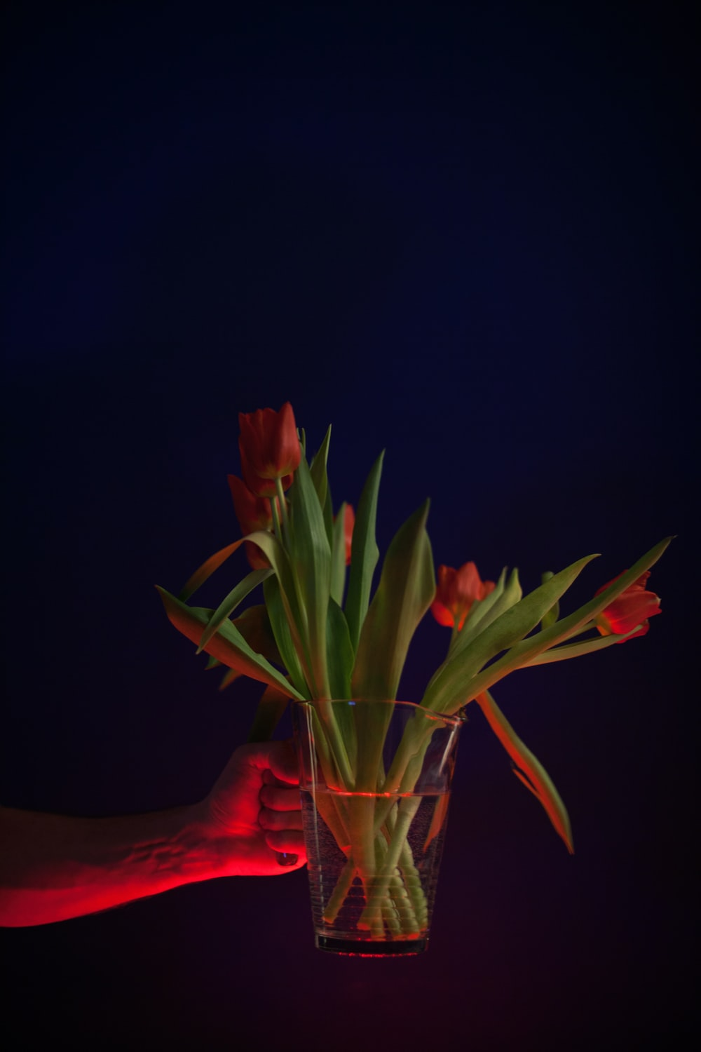 red tulip flowers in clear glass pitcher vase