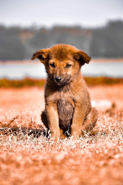 brown puppy sitting on floor