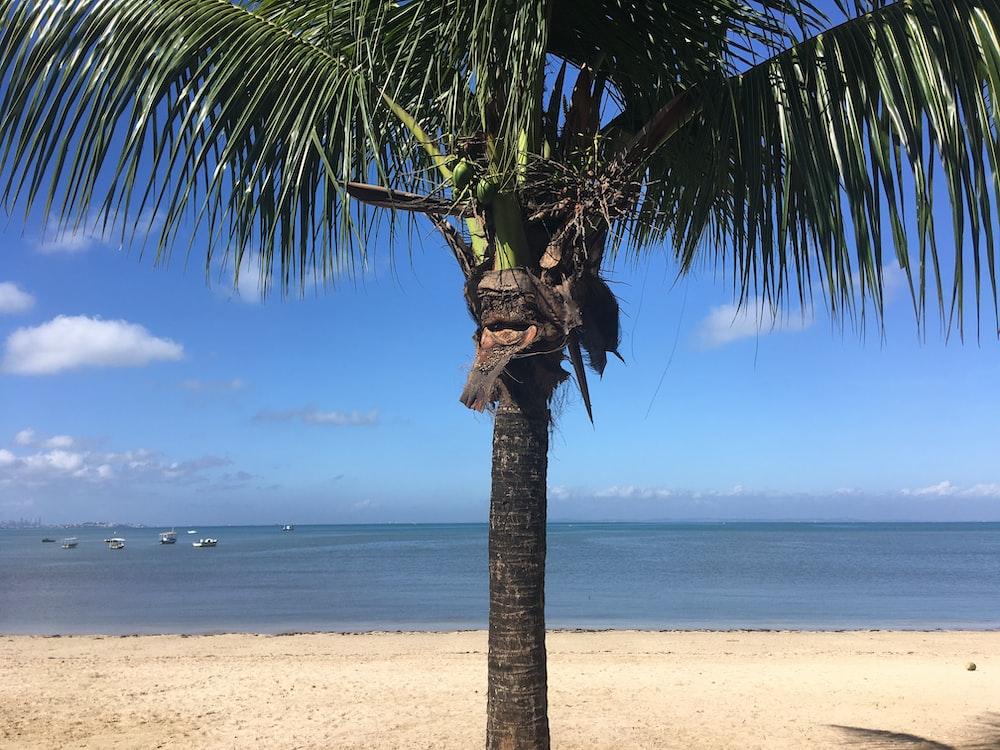 coconut tree at the beach