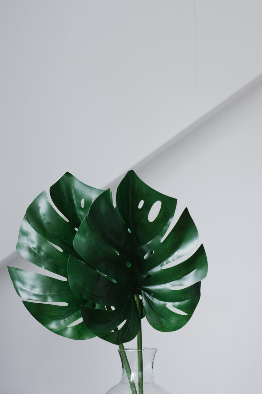 green leafed on vase
