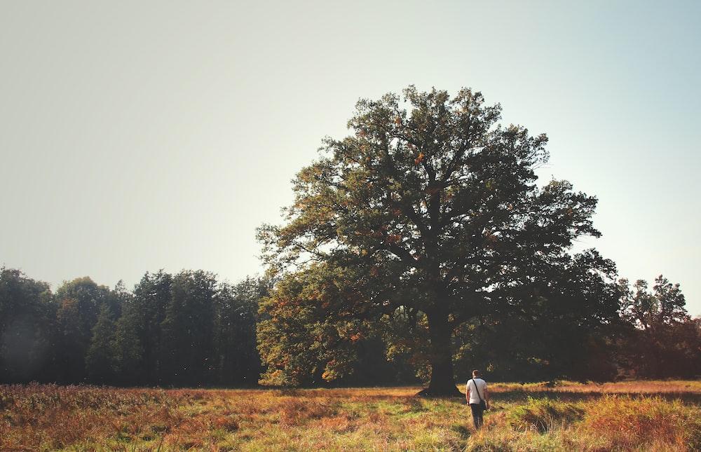 man standing on grass field facing tree