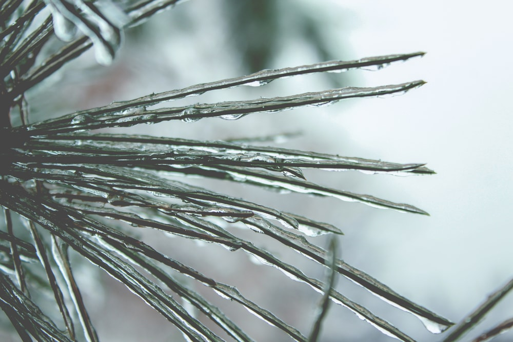 frozen water on thorns