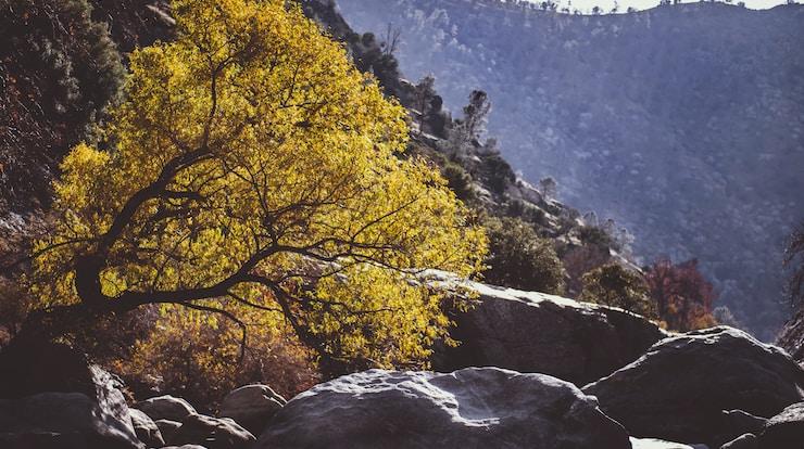 rocks near tree