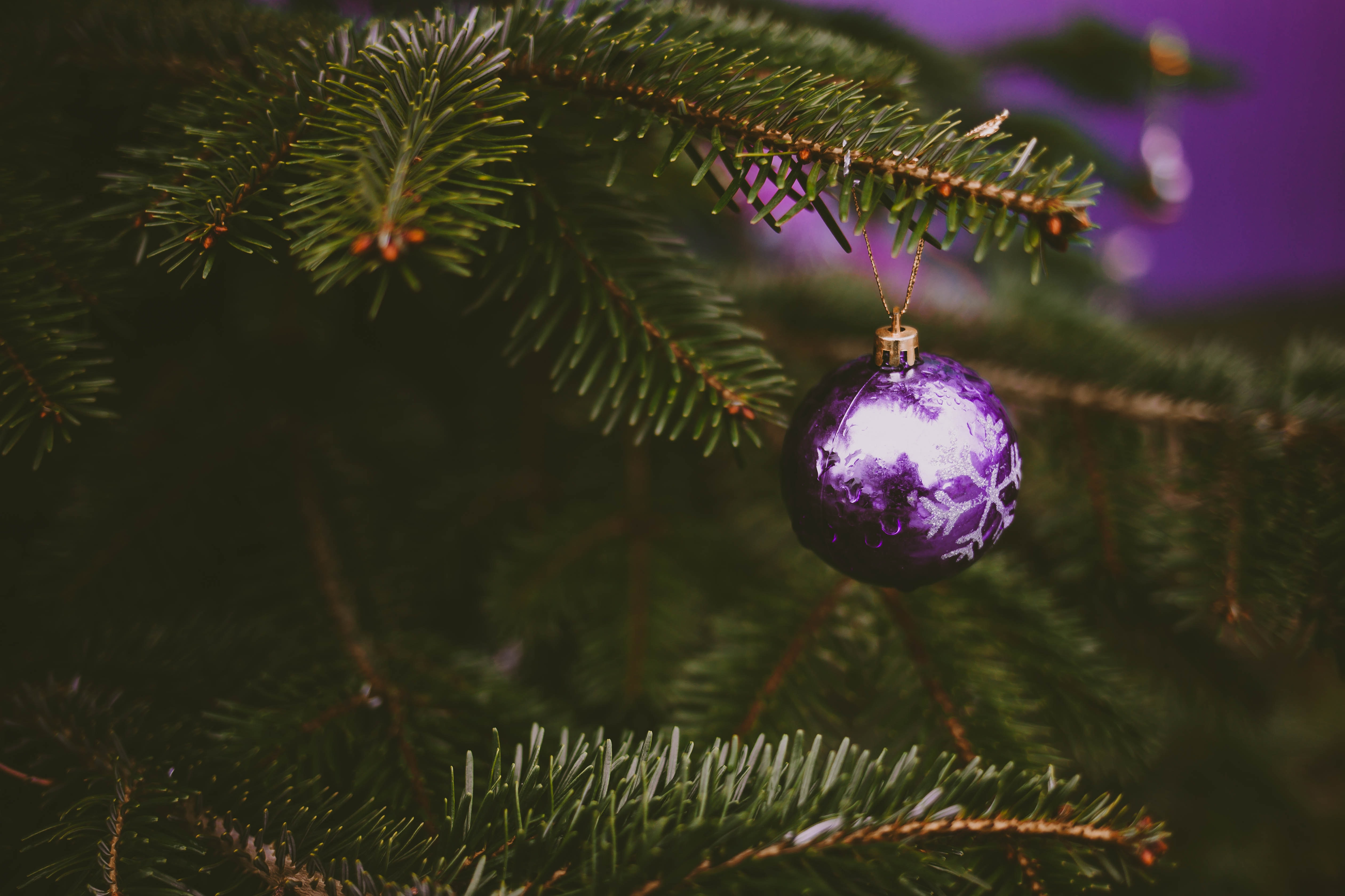 purple bauble and green christmas tree