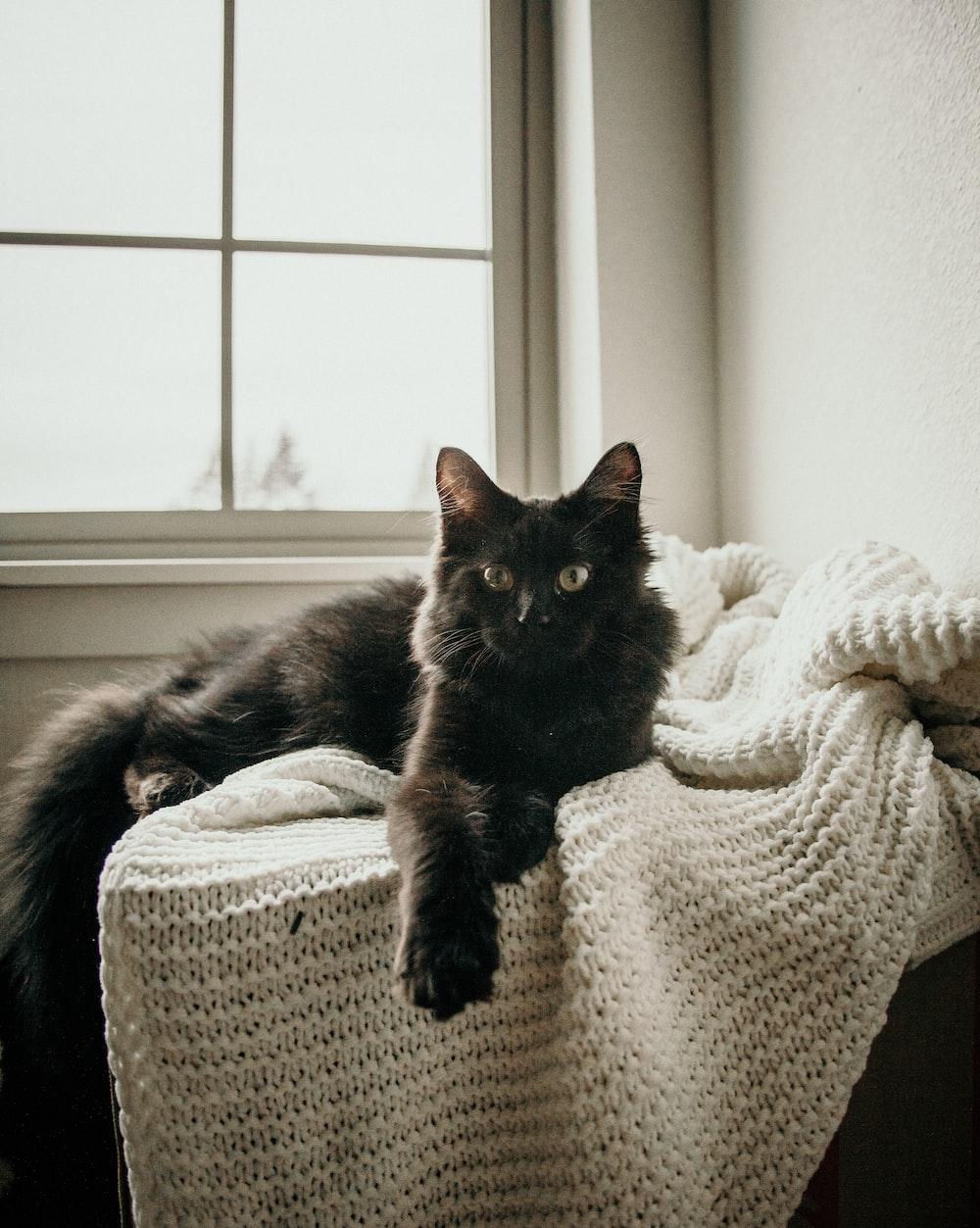 black cat lying on white knit textile