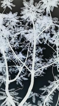 black and white trees photo