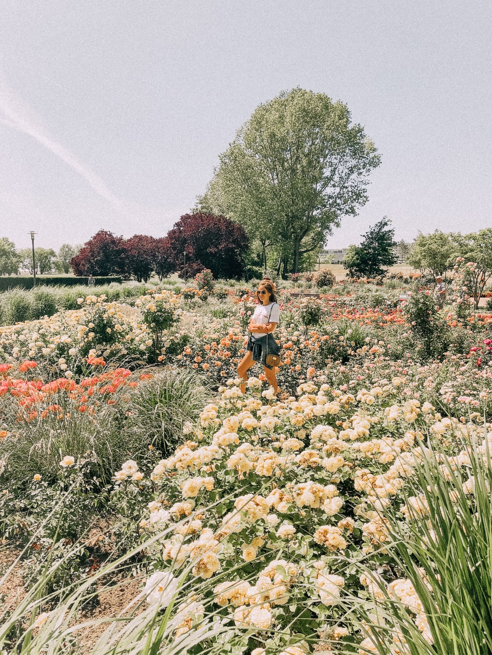 woman standing in middle of flower field during daytime