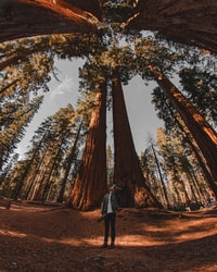 low-angle photography of person standing on forest