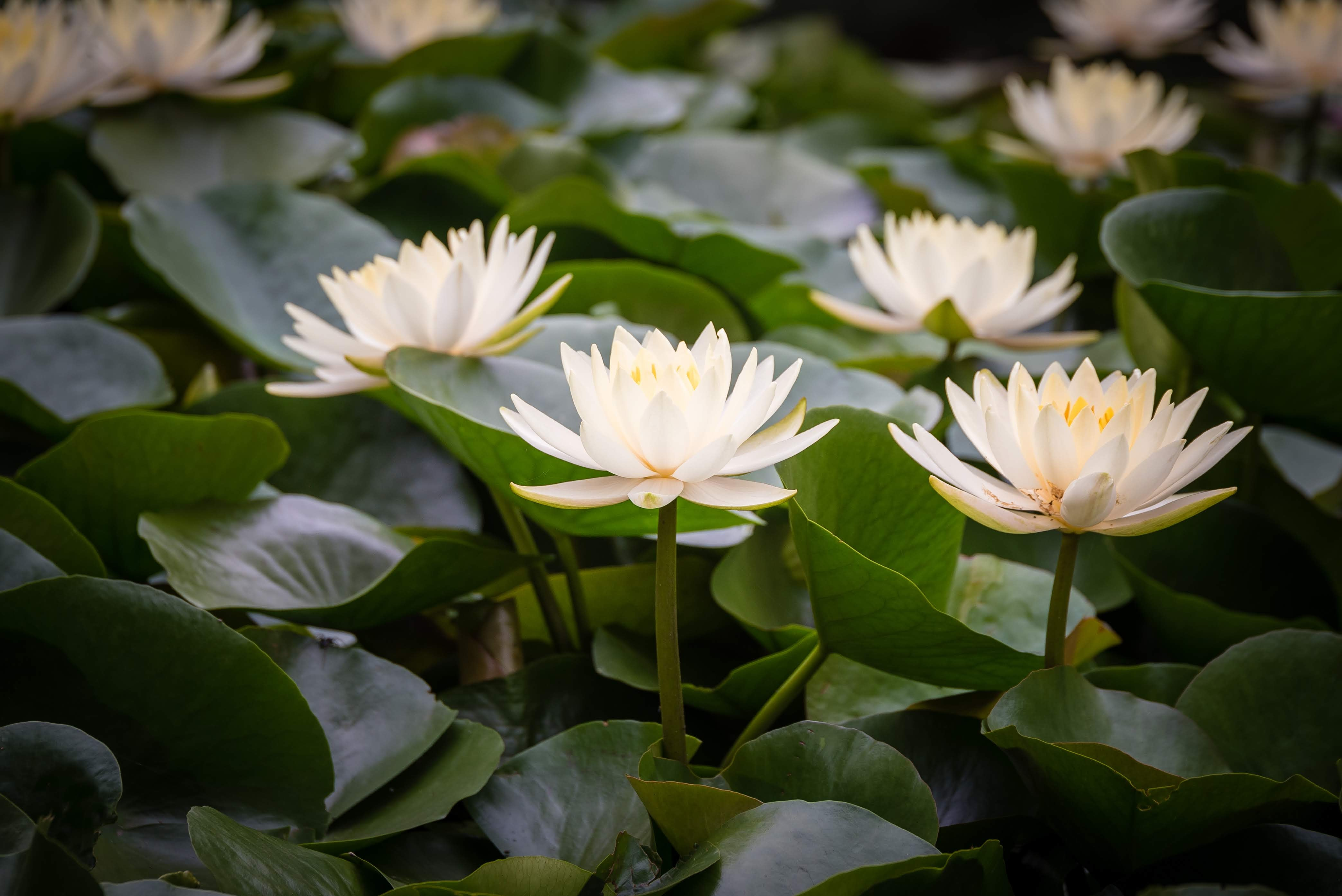 white and green petaled flower