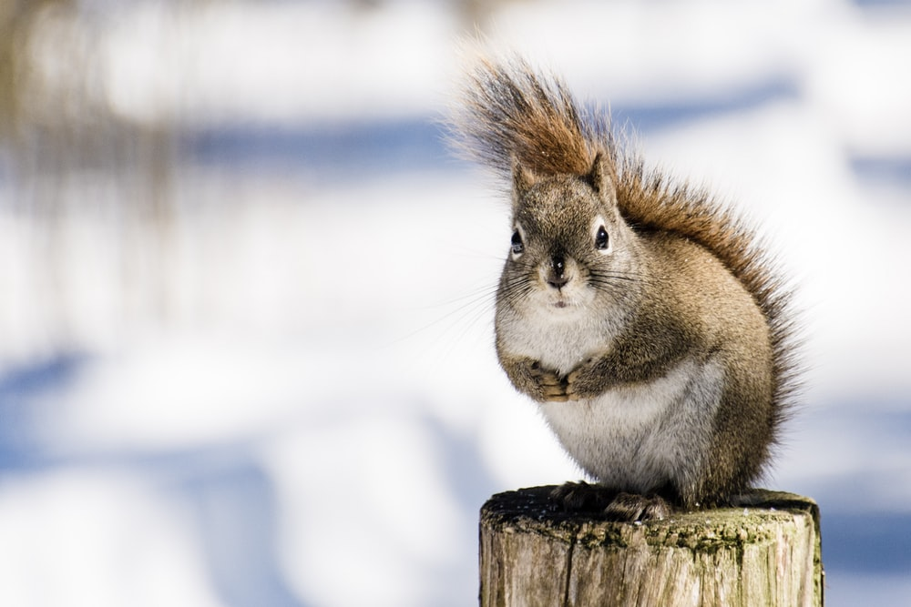 squirrel on brown post