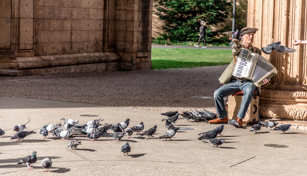 man playing accordion surrounded by pigeons