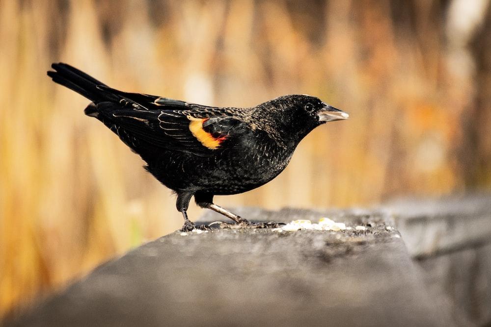 macro shot of black bird