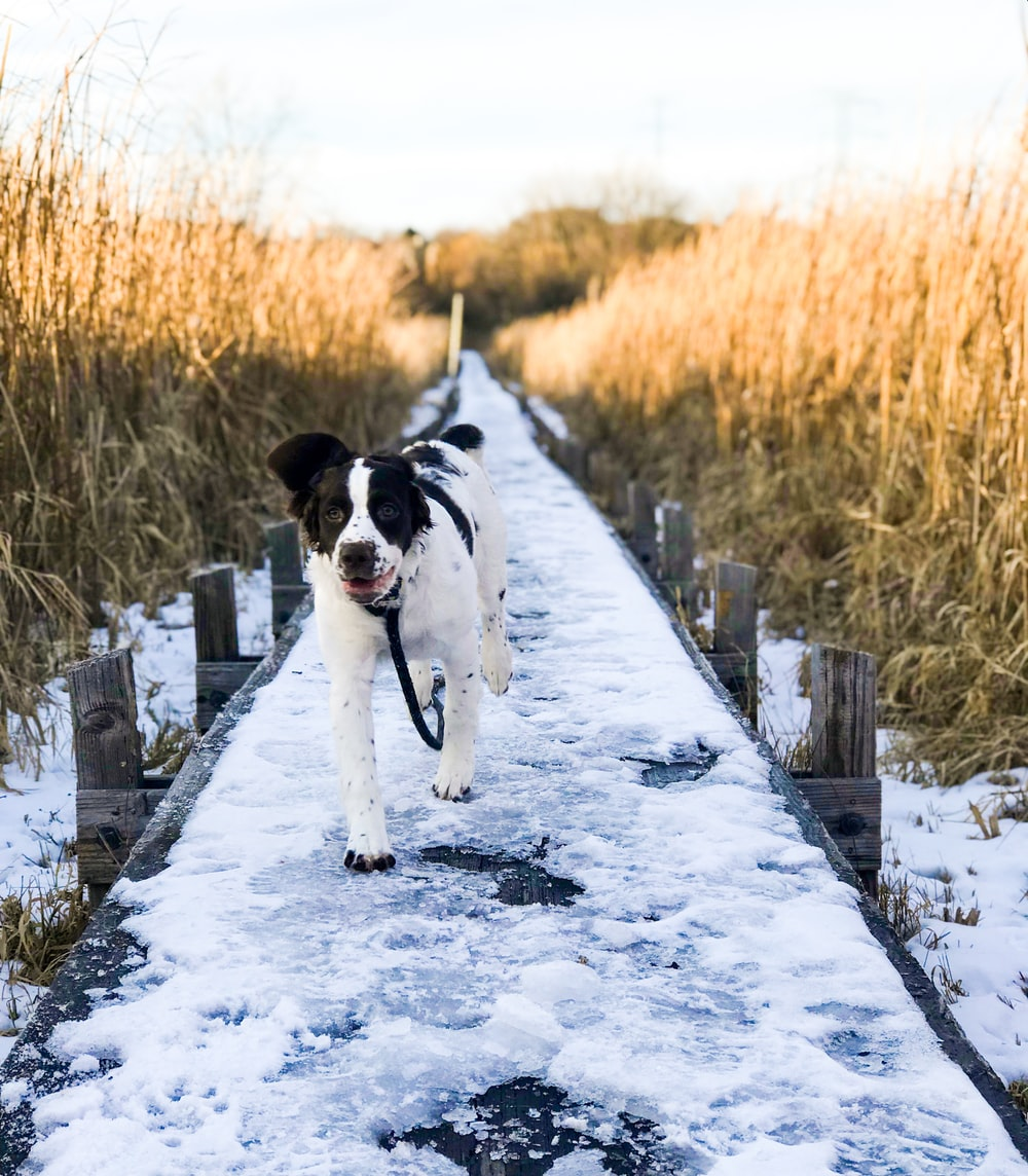 dog walking on concrete walkway covered with snow