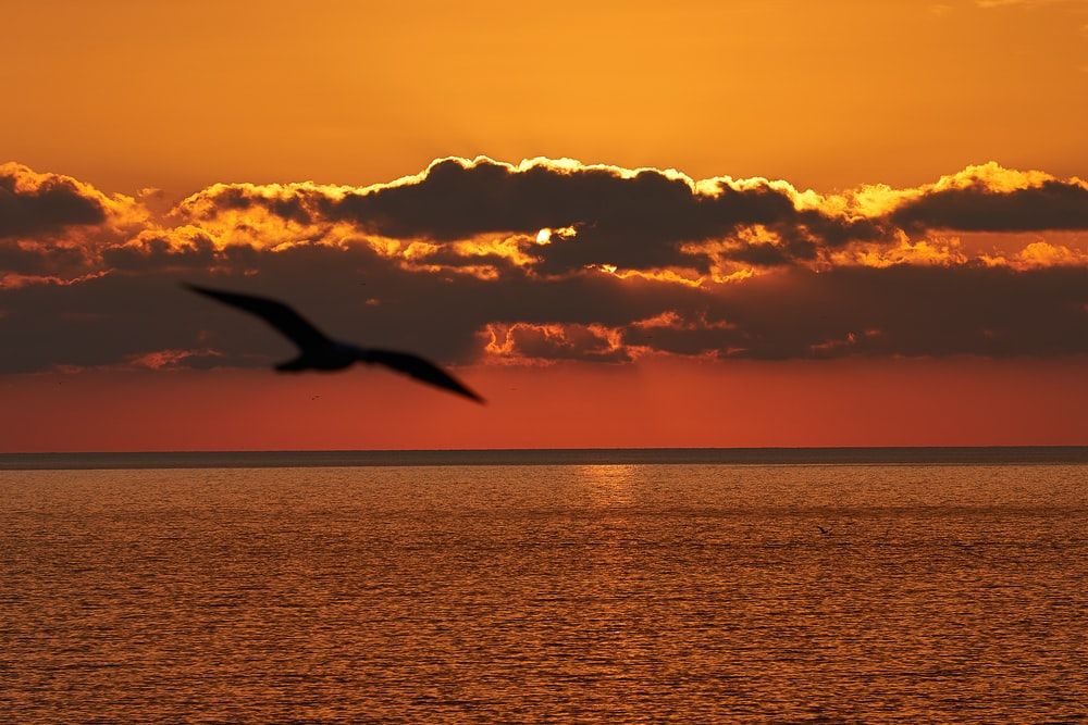 silhouette of flying bird across horizon during dawn