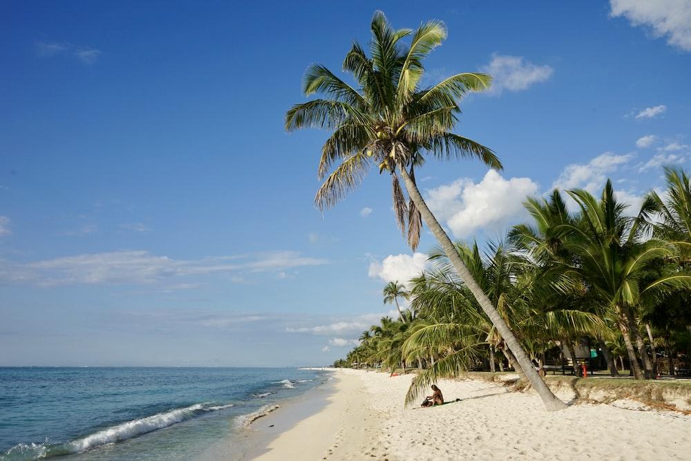 green coconut tree near n seashore