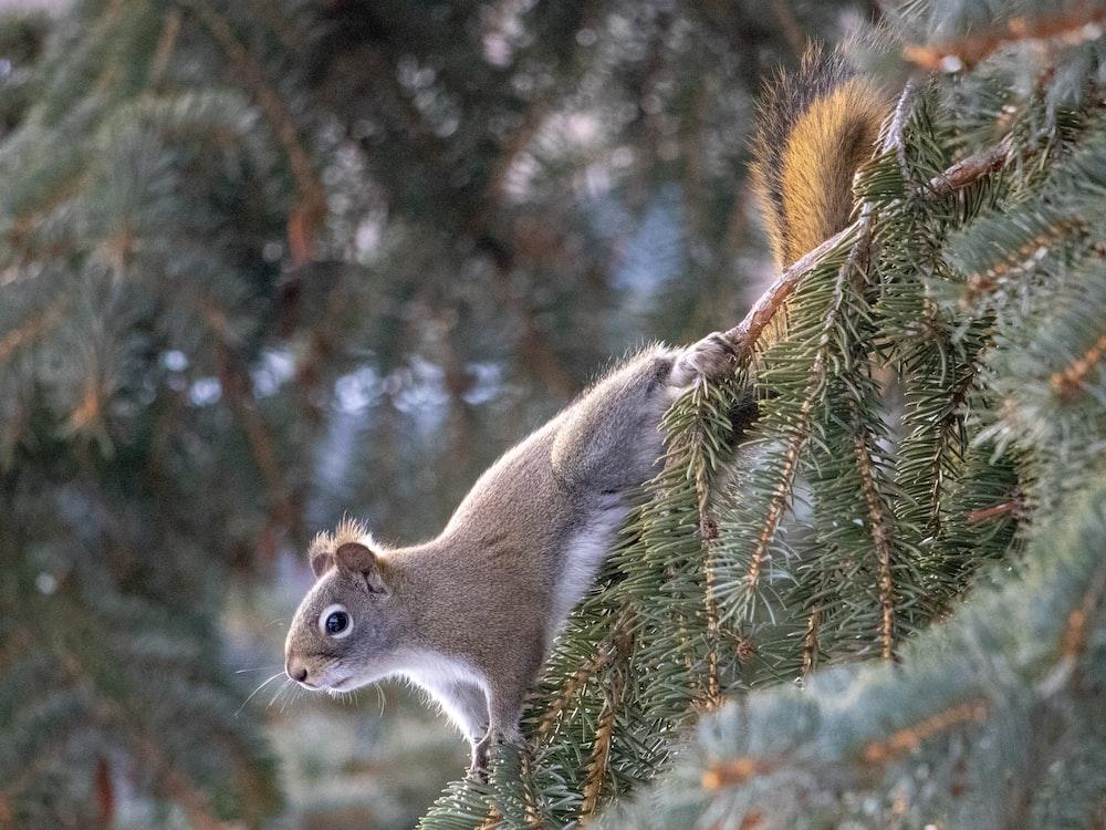 brown skunk on green tree
