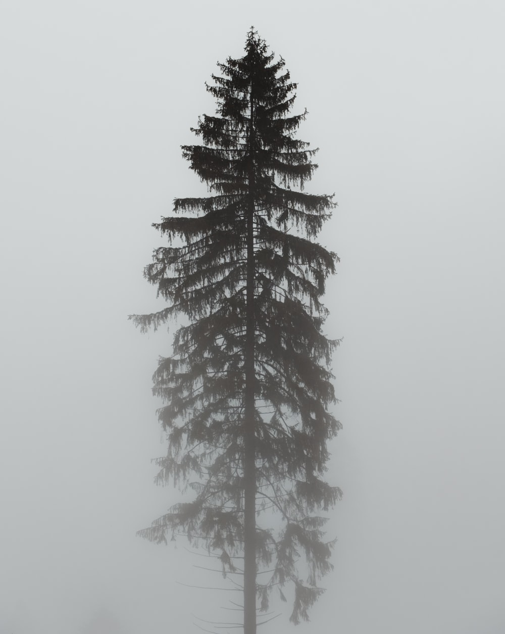 green-leafed tree with fog