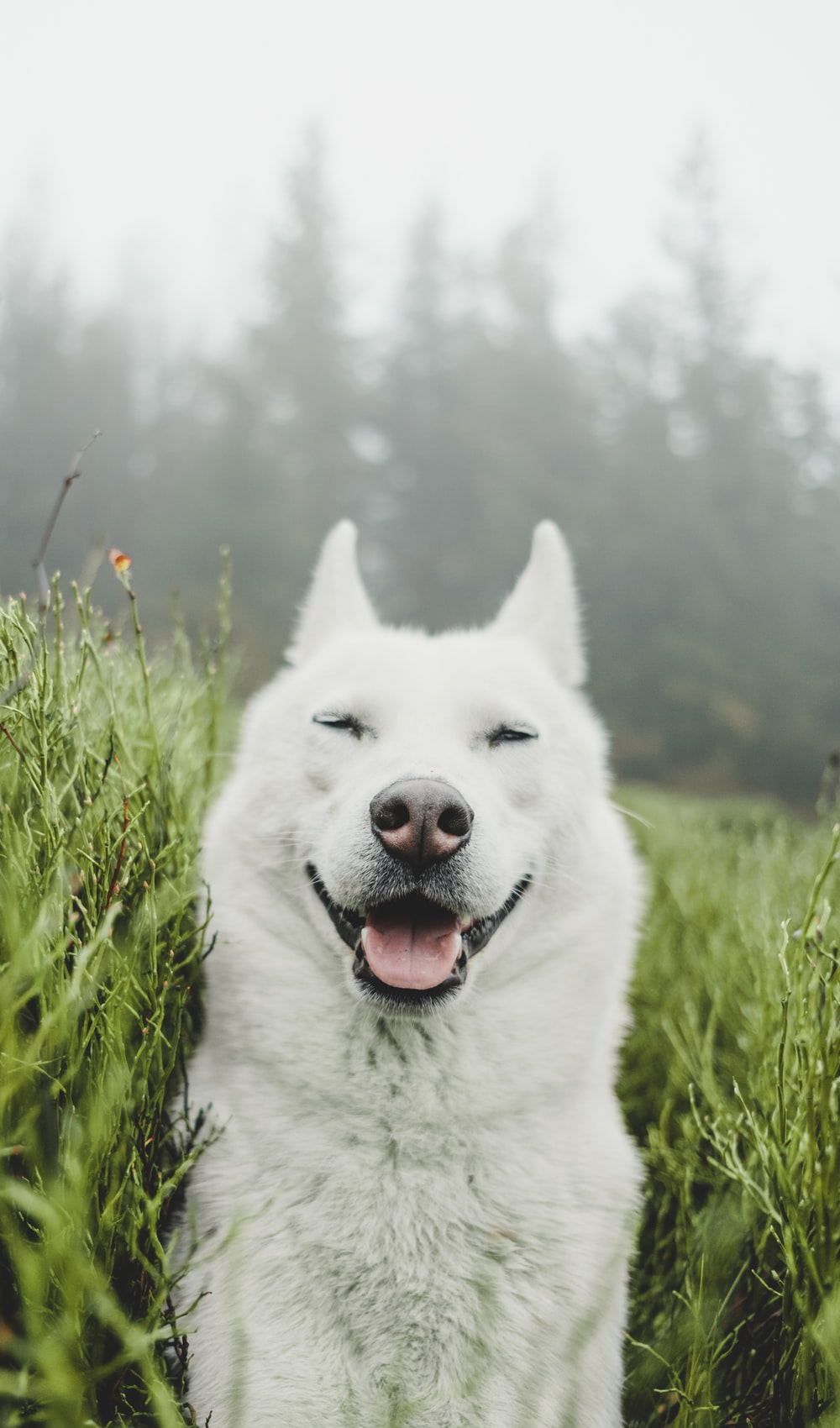 white dog between bushes