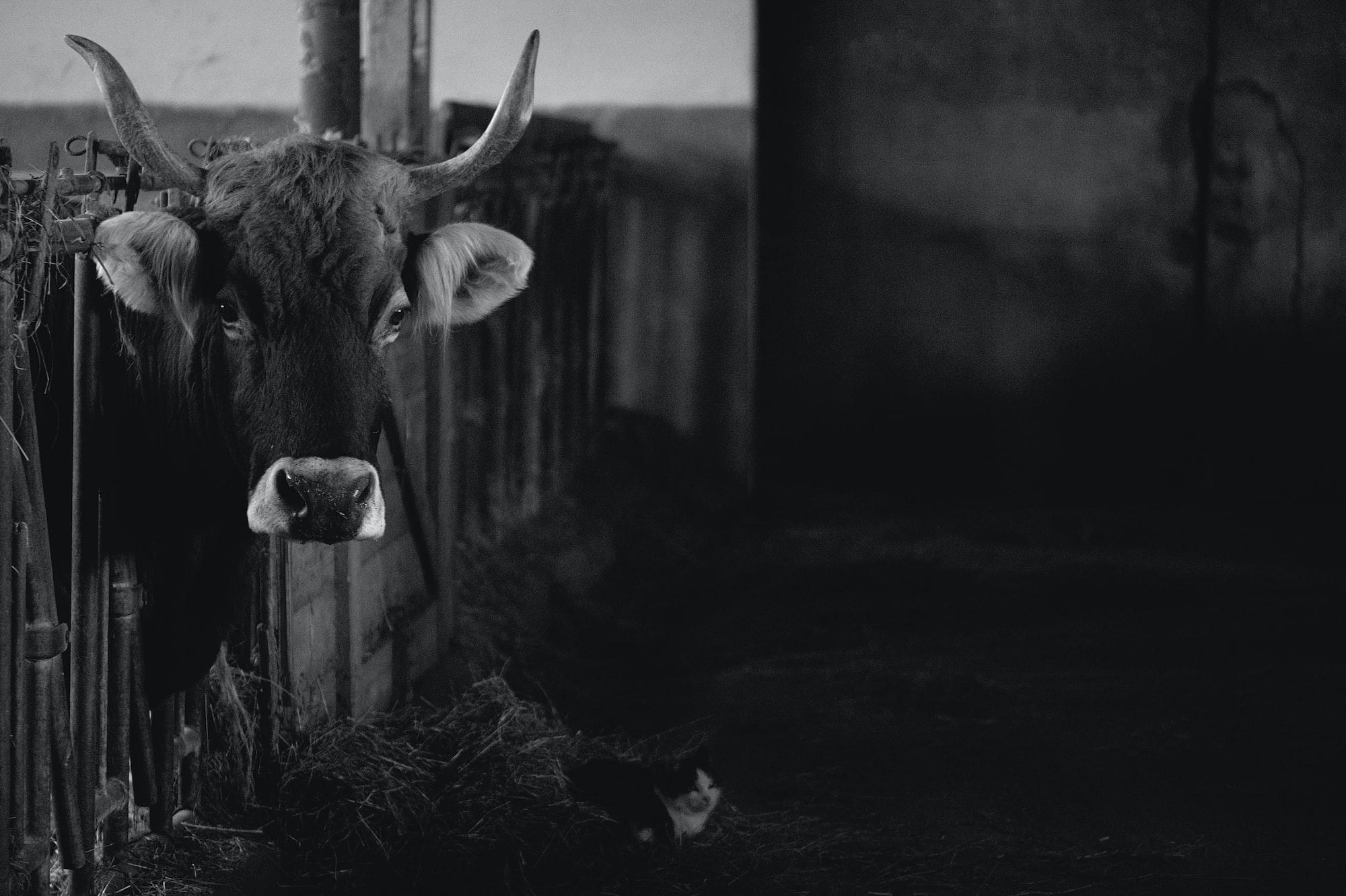 Energieeffizienz in der Viehwirtschaft