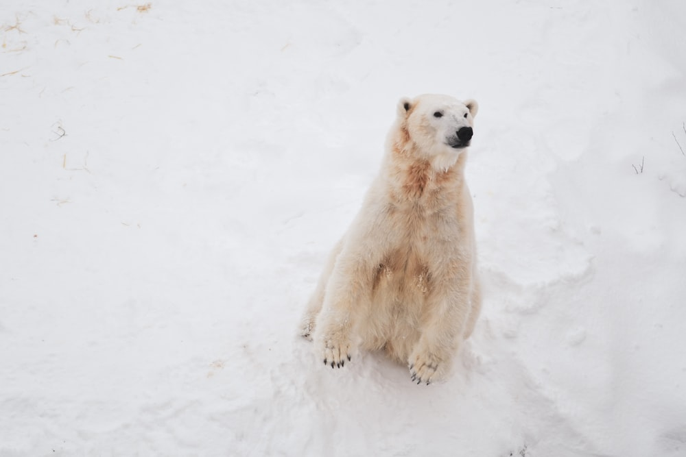 white bear on snow covered field
