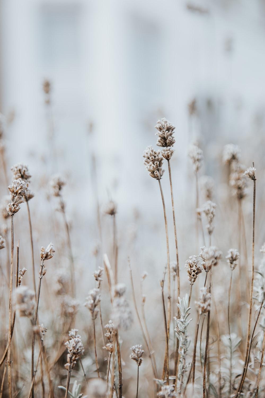 white petaled flowers macro photography