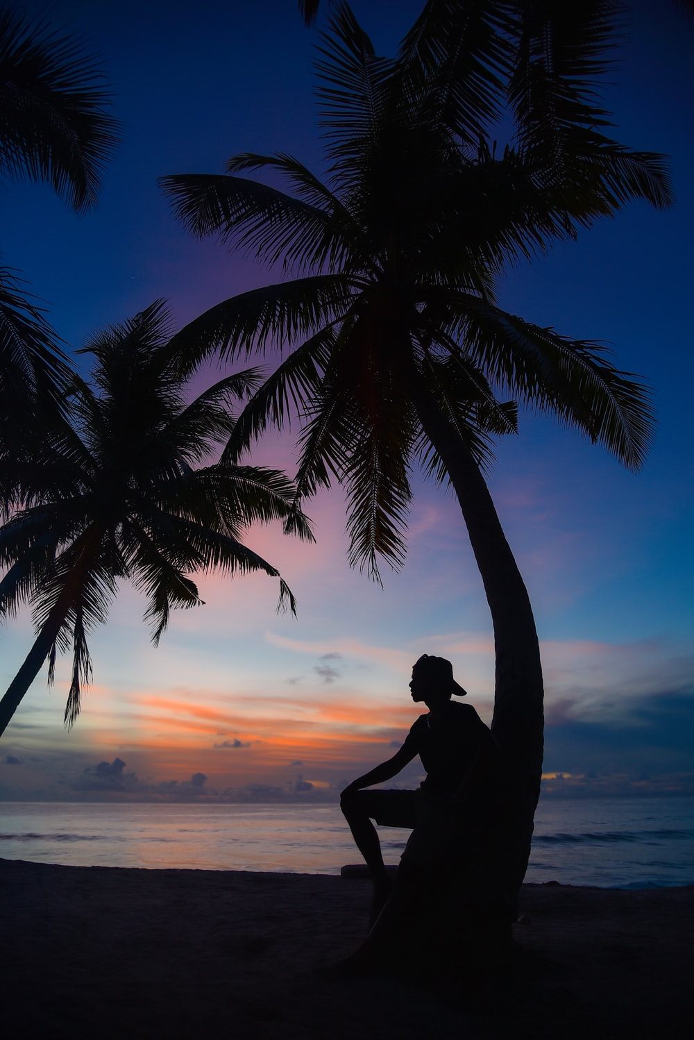 silhouette of man standing beside palm tree