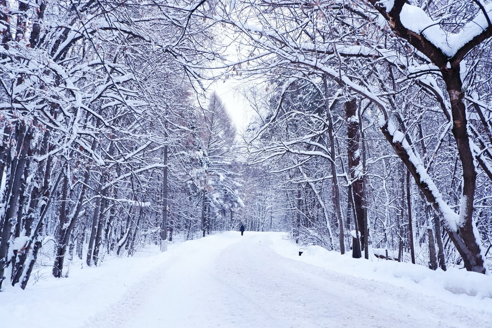 snow covered road and bare trees during daytime