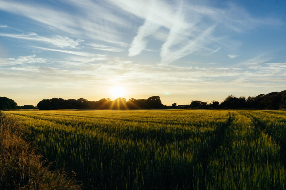 green field under blue and white sky during sunset