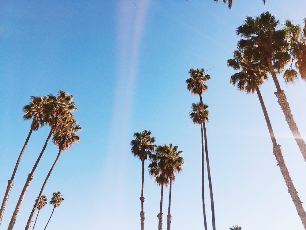 palm trees in low angle photography