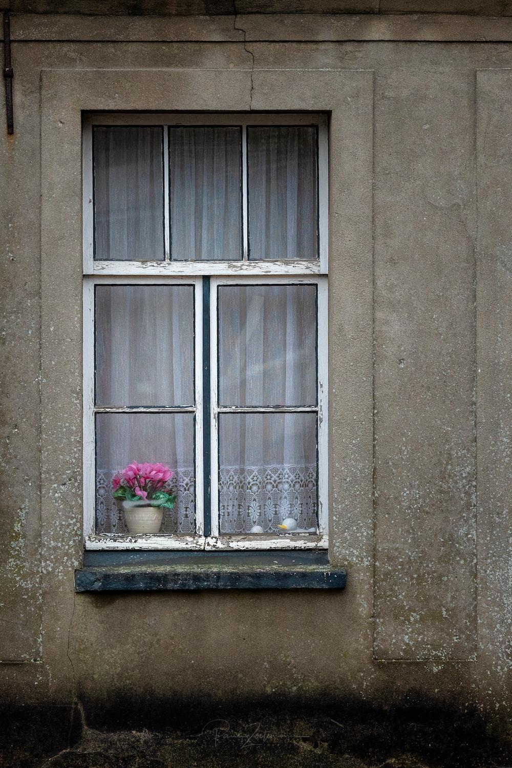 pink flowers near window