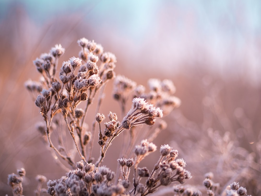 selective focus photography of white plants