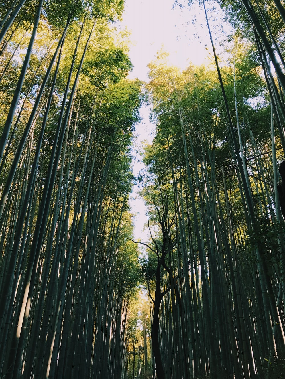 low angle photography of bamboo