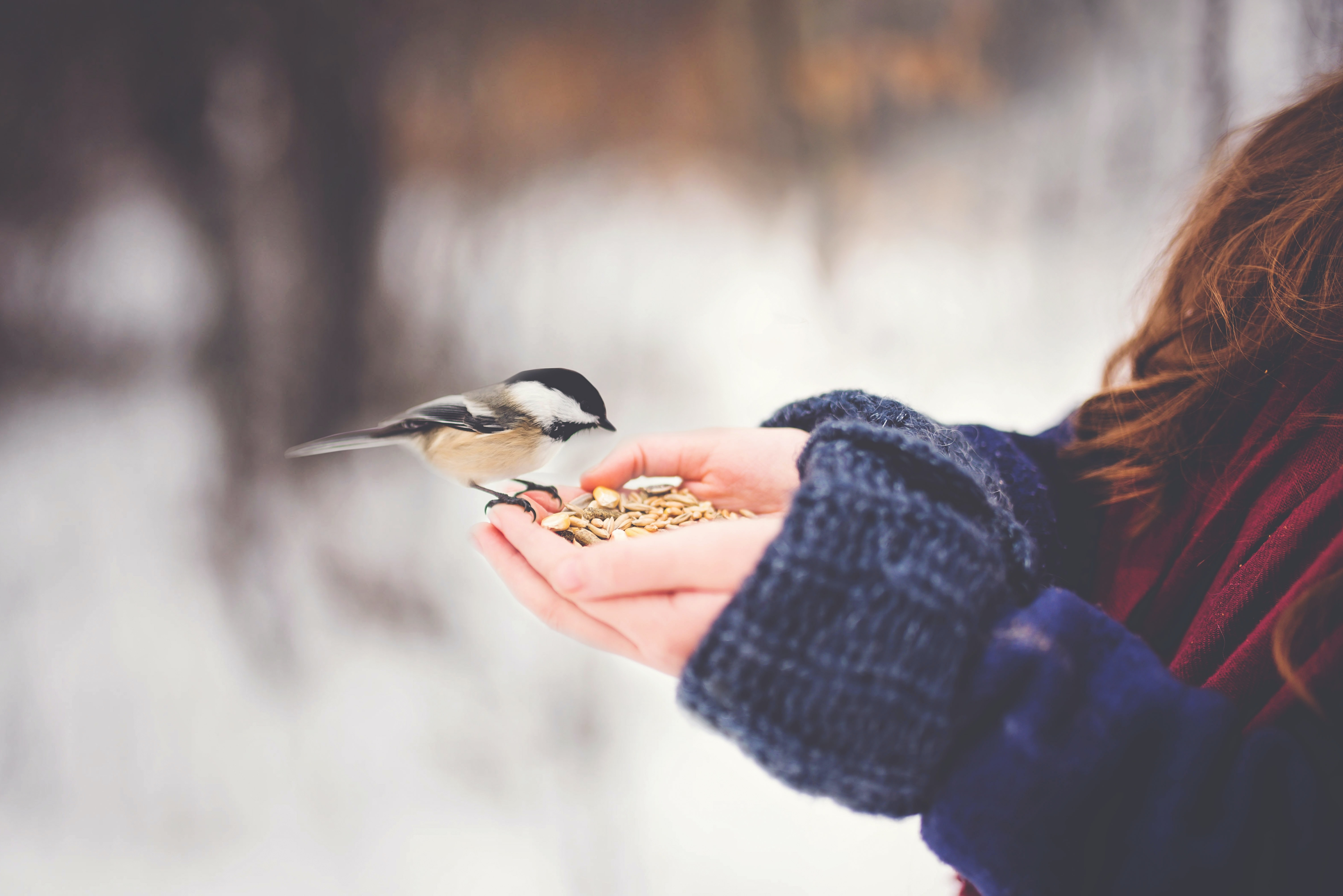 bird on woman hand with feeds