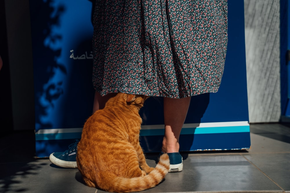 orange tabby cat under the skirt of woman