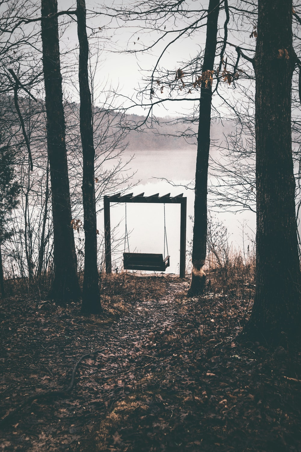 silhouette photography of bench swing under trees