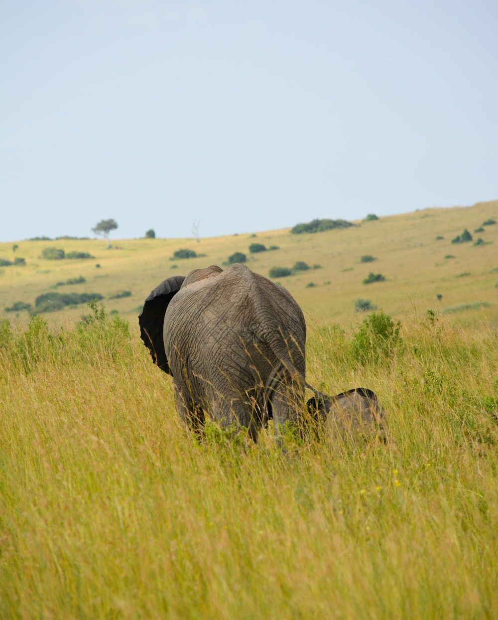 gray elephant and baby elephant in green field