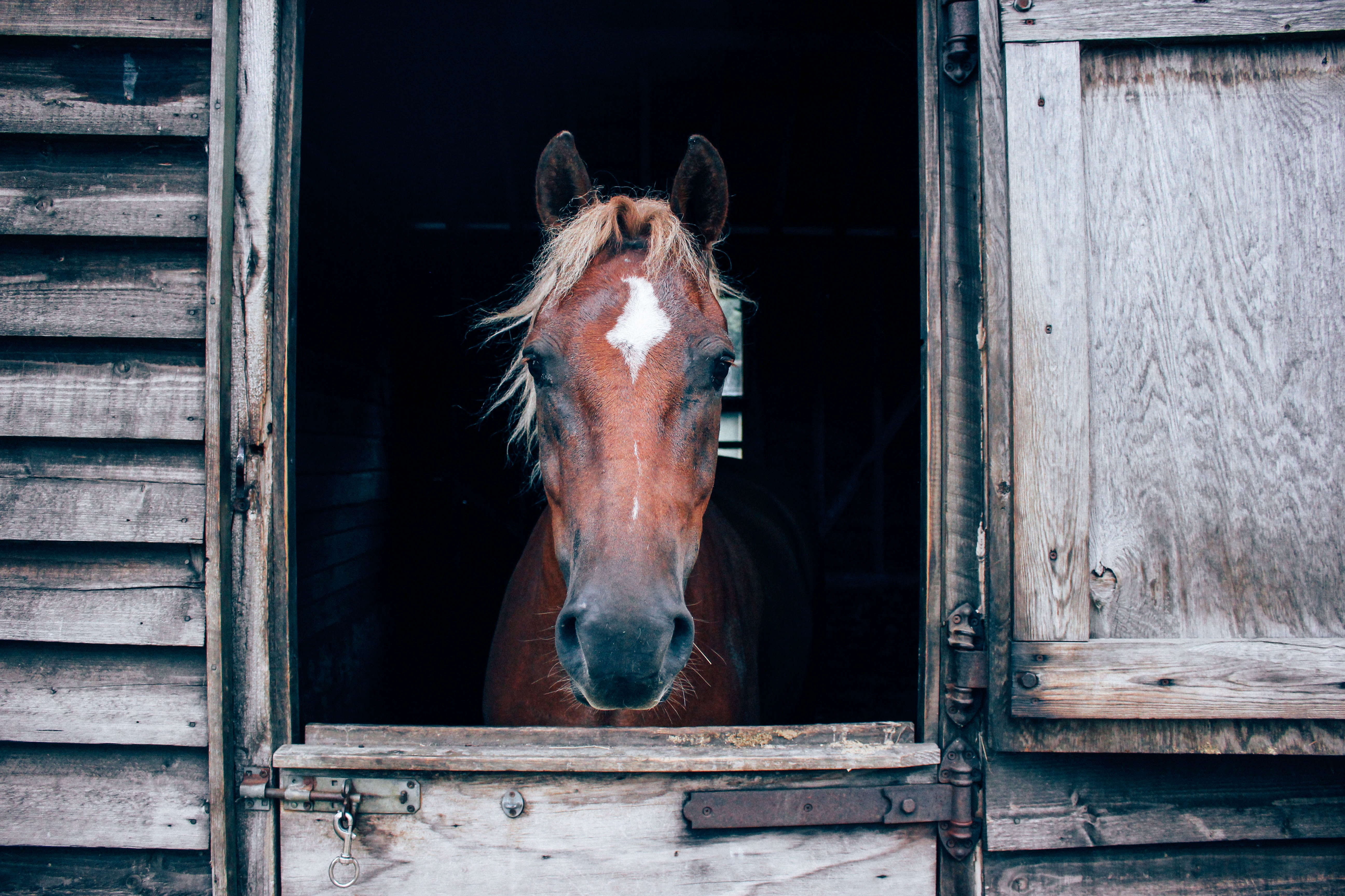 close-up photography of horse in barn
