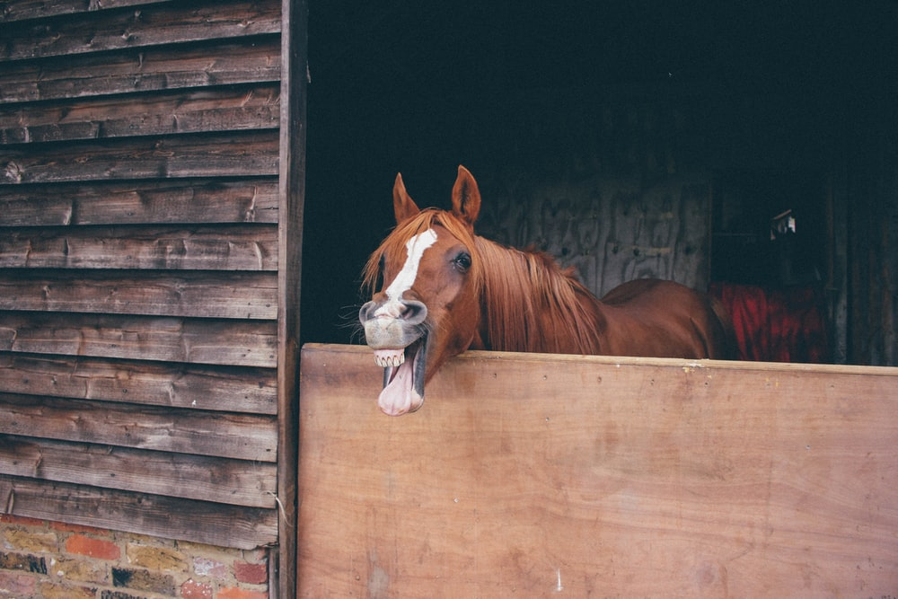 brown horse on cage